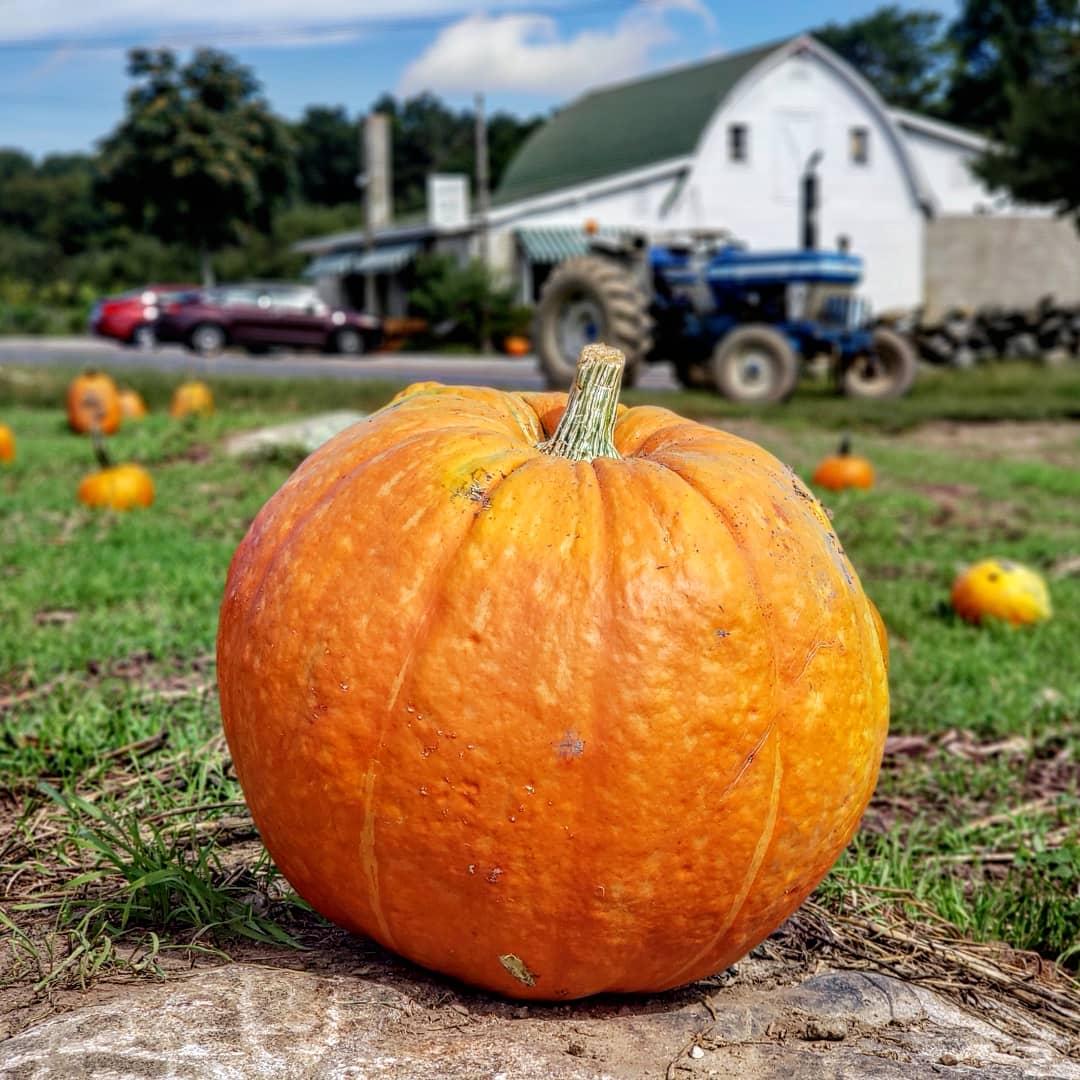 Pumpkin at Whittle's