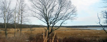 Barn Island Wildlife Management Area (Stonington)